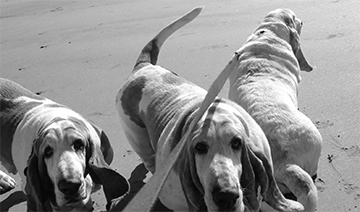 dogs at the beach2